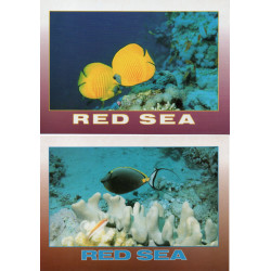 2 CPM RED SEA / POISSONS / Neuves / lot 14/03